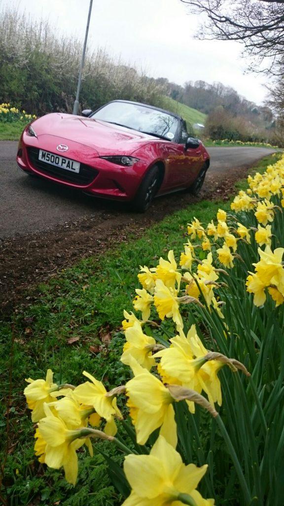 Daffodil drive 2 April 2017